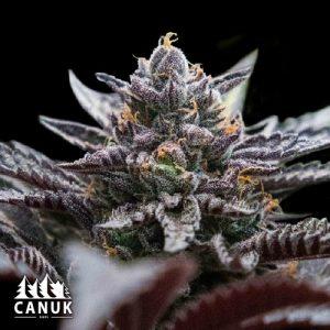 Cannabis Seed Souvenirs - Biltong and Budz
