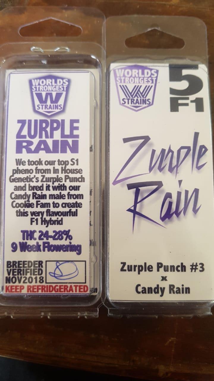 Zurple Rain [Regular] - 5 Seeds